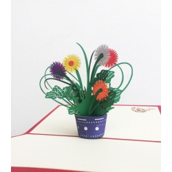Chrysanthemum Flowers Pot